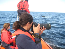 Conducting photo-identification studies in the outer firth