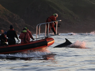 Filming the bottlenose dolphins at sunset for a secondary school educational video - Camilla Spielberg on the bow sprit